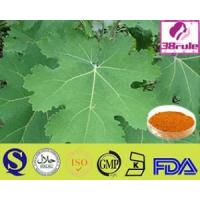 China The Best And High Quantity Sanguinaria Extract on sale