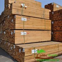 China Canada Pine Timber on sale