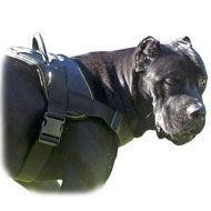China Nylon multi-purpose dog harness for tracking-pulling-Cane Corso on sale