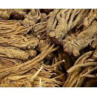 China Angelica Extract/Dong Quai Extract on sale