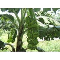 Cheap Banana Fiber Textile Products -----Fruit Clothing,Love Life,Love Earth for sale