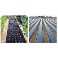 Cheap Pe mulching film with hole for sale