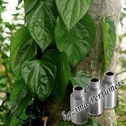 Buy cheap Betel Leaf Oil from wholesalers