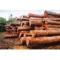 Cheap Logs & Woodchip for sale