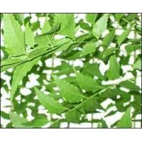 Cheap Hindi  Neem Leaves for sale