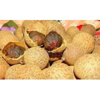 China Good supply of green food storage dry longan system-level on sale