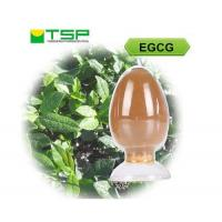 Cheap EGCG - Epigallocatechin gallate for sale