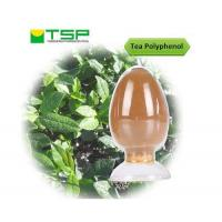 Cheap Tea polyphenols for sale