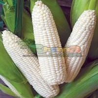 Buy cheap White Corn Maize from wholesalers