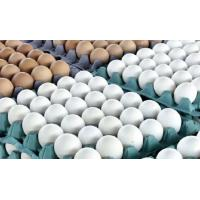 Buy cheap Fresh Chicken Eggs from wholesalers