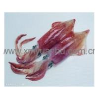 Buy cheap squid products from wholesalers