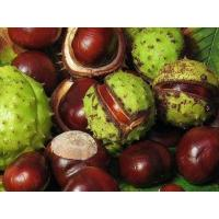 Cheap Standard Extracts Horse Chestnut Extract for sale