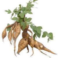 Cheap Standard Extracts Kudzu Root Extract for sale